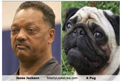 Pug Jackson