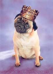 Pug_crown
