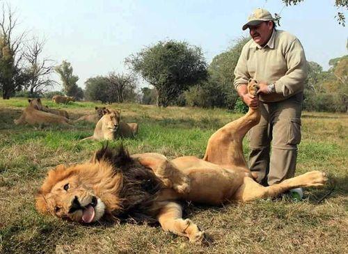 Lionfootrub