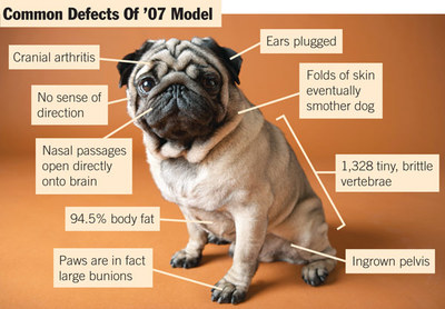 Dog breeders recall 07 Pugs